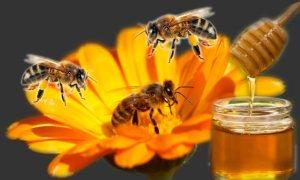 manfaat madu untuk kesehatan anak